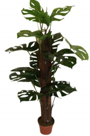 1.2M Tall Artificial Cheese Plant With Pot