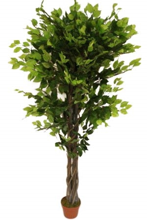 1.6M Tall Artificial Ficus Benjamina With Pot