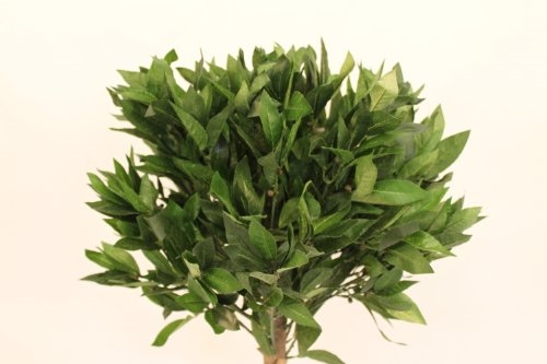 1.2M Tall Artificial Bay Tree With Pot
