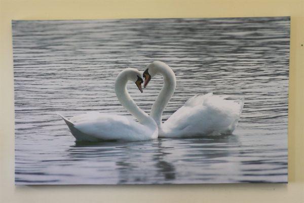Large Swans Canvas Print