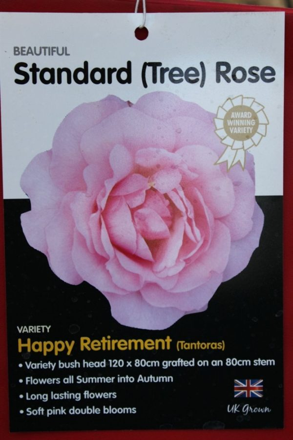 Standard Rose Tree Bush Variety 'Happy Retirement' 1.3m tall