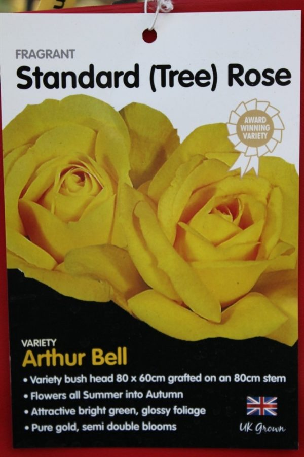 Standard Rose Tree Bush Variety 'Arthur Bell' 1.3m tall
